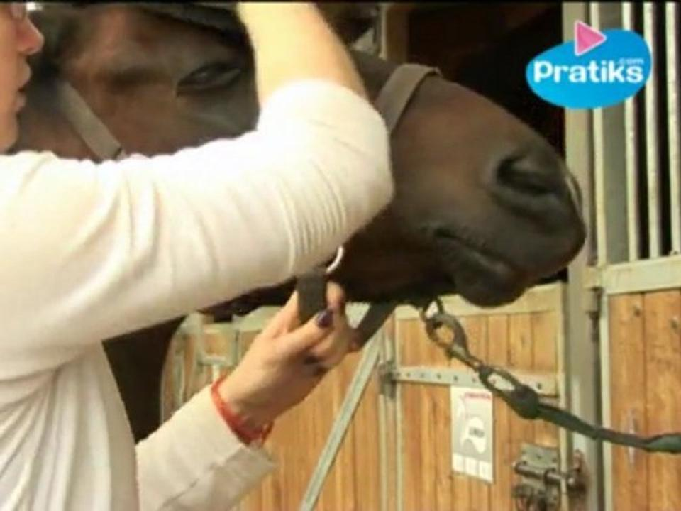 Horse Riding - How to use the body brush